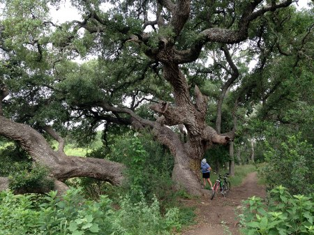 The twisted, gnarled live oak dwarfed Maggie.